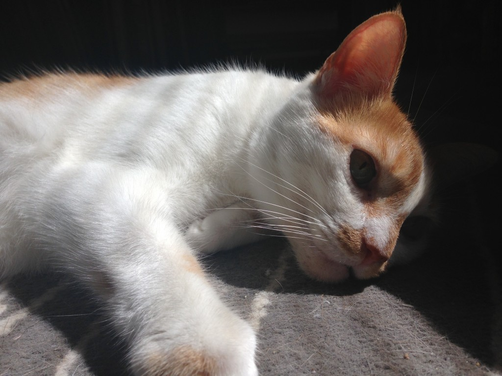 I am solar powered. I am cat.