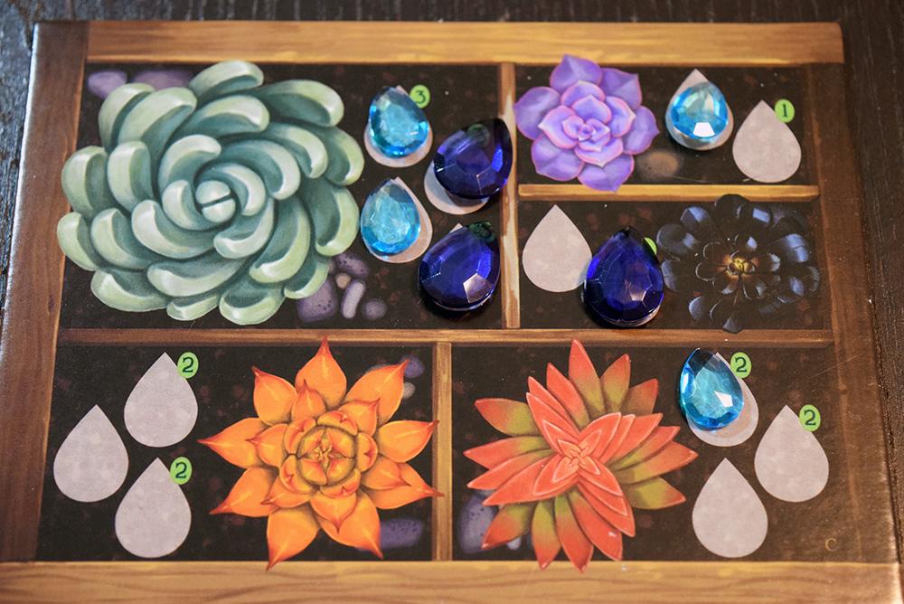 Succulent - greenhouse board