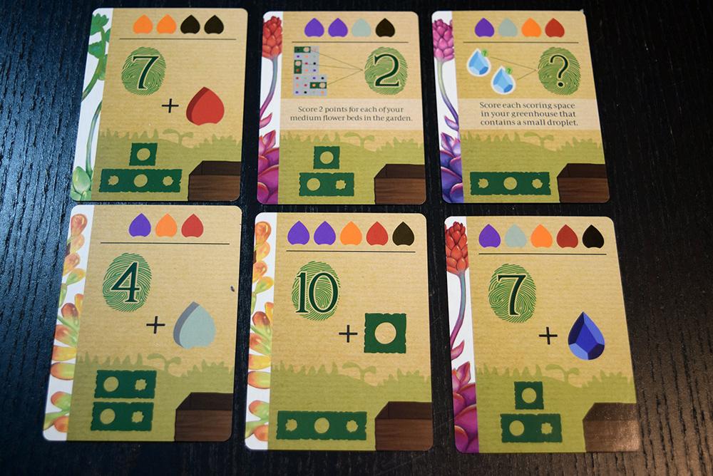 Succulent project cards